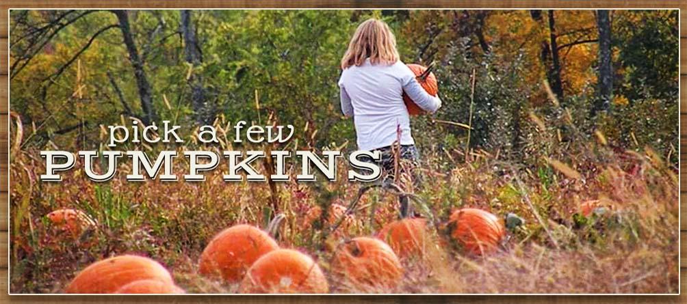ssPumpkins