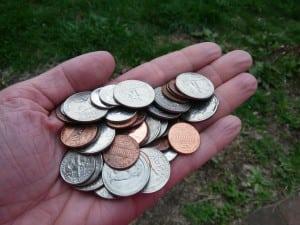 money_tree_seeds