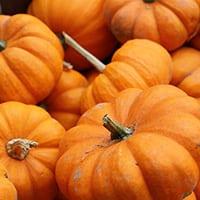 u pick pumpkins