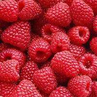 u pick raspberries